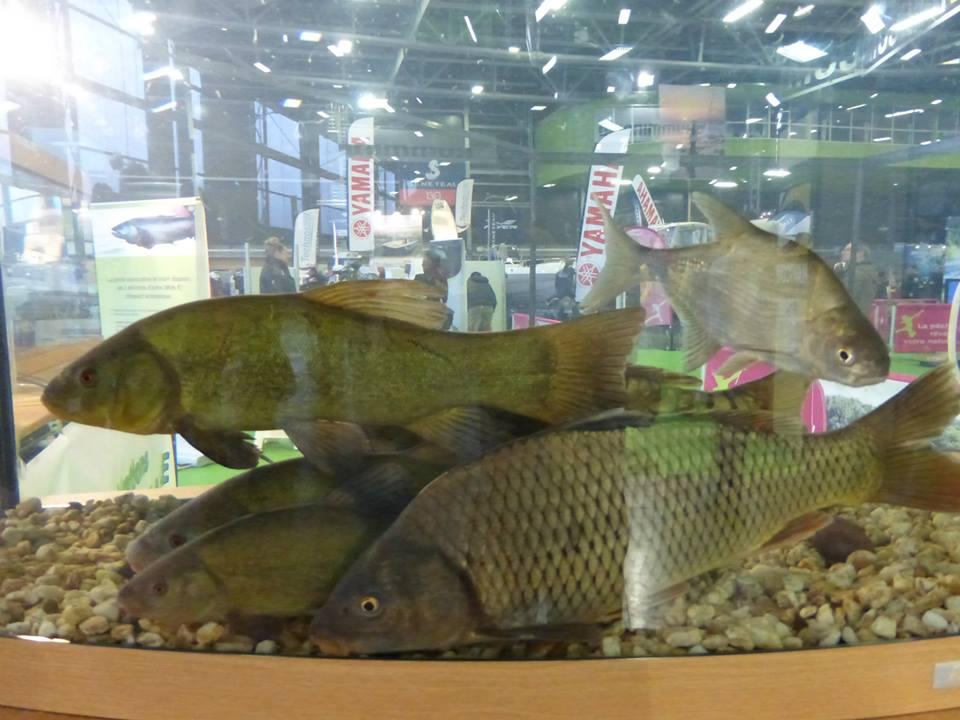 Salon européen des pêches